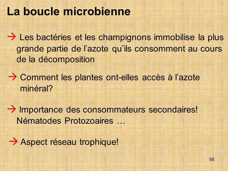 56  Les bactéries et les champignons immobilise la plus grande partie de l'azote qu'ils consomment au cours de la décomposition  Comment les plantes