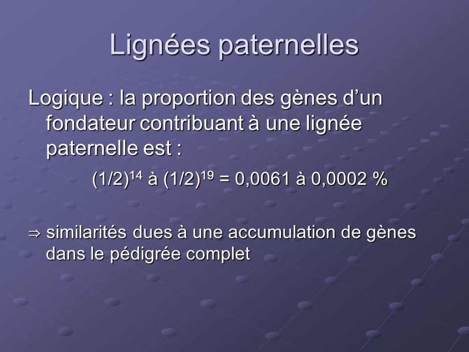 Lignées paternelles Logique : la proportion des gènes d'un fondateur contribuant à une lignée paternelle est : (1/2) 14 à (1/2) 19 = 0,0061 à 0,0002 % (1/2) 14 à (1/2) 19 = 0,0061 à 0,0002 % ⇒ similarités dues à une accumulation de gènes dans le pédigrée complet