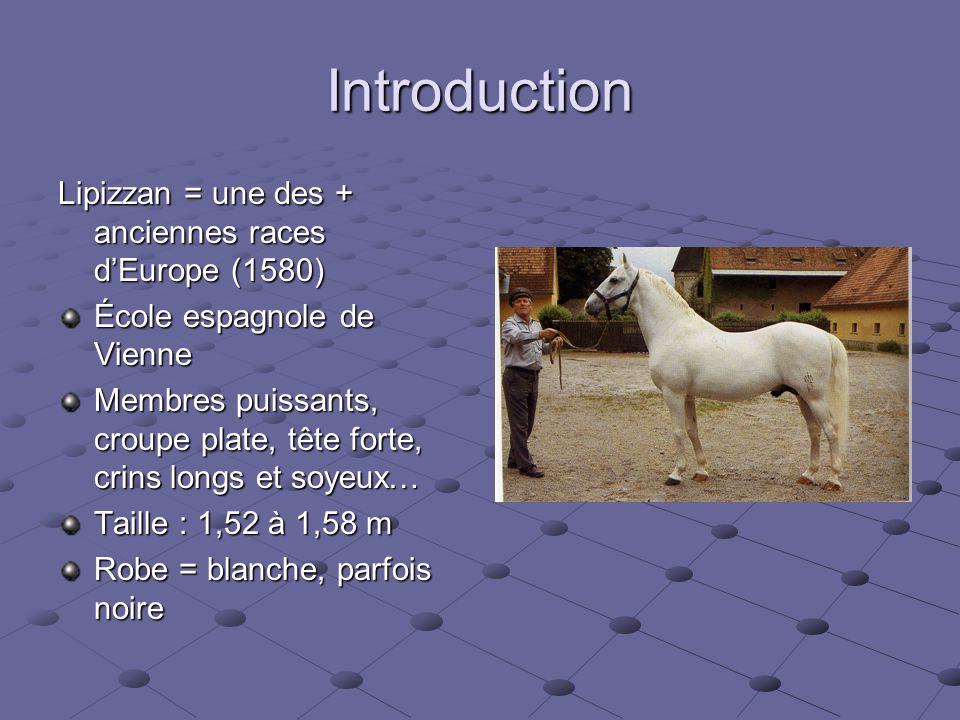 Introduction Lipizzan = une des + anciennes races d'Europe (1580) École espagnole de Vienne Membres puissants, croupe plate, tête forte, crins longs et soyeux… Taille : 1,52 à 1,58 m Robe = blanche, parfois noire