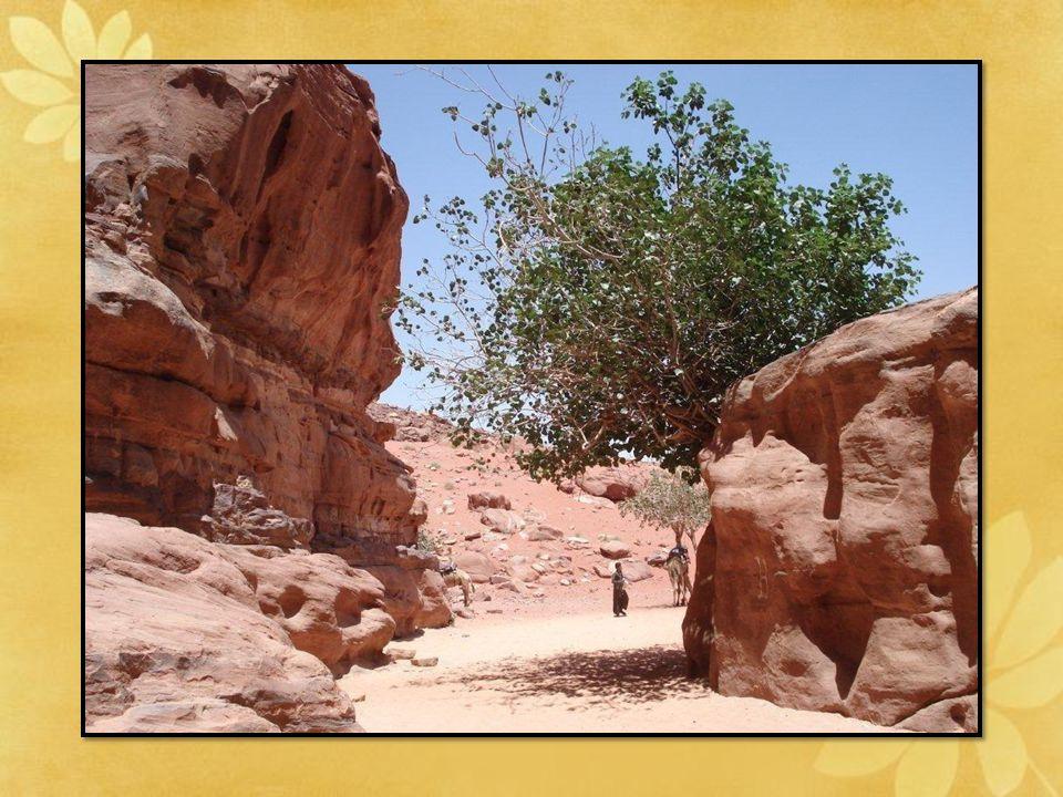 Le Wadi Rum: est l'un des sites les plus beaux de la Jordanie: massifs en grés rouge et granit.