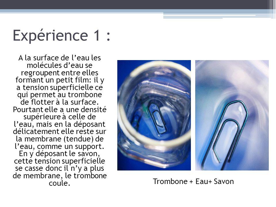 Expérience 1 : A la surface de l'eau les molécules d'eau se regroupent entre elles formant un petit film: il y a tension superficielle ce qui permet a