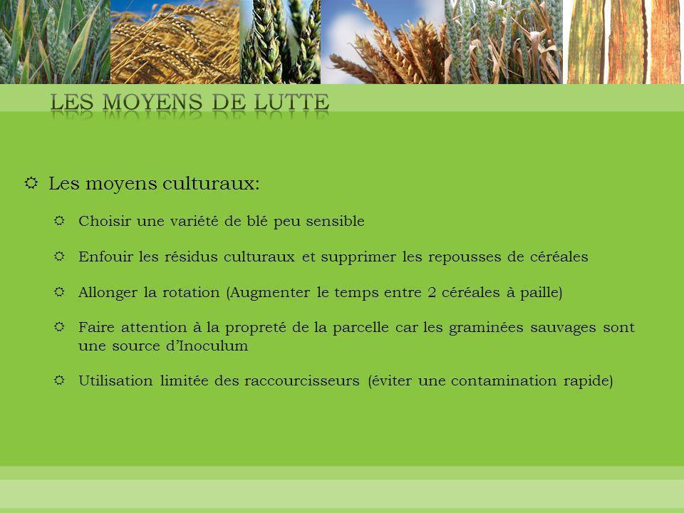  Les moyens culturaux:  Choisir une variété de blé peu sensible  Enfouir les résidus culturaux et supprimer les repousses de céréales  Allonger la