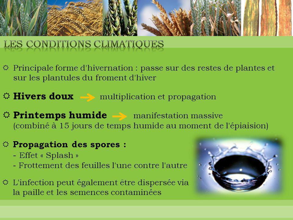  Principale forme d'hivernation : passe sur des restes de plantes et sur les plantules du froment d'hiver  Hivers doux multiplication et propagation