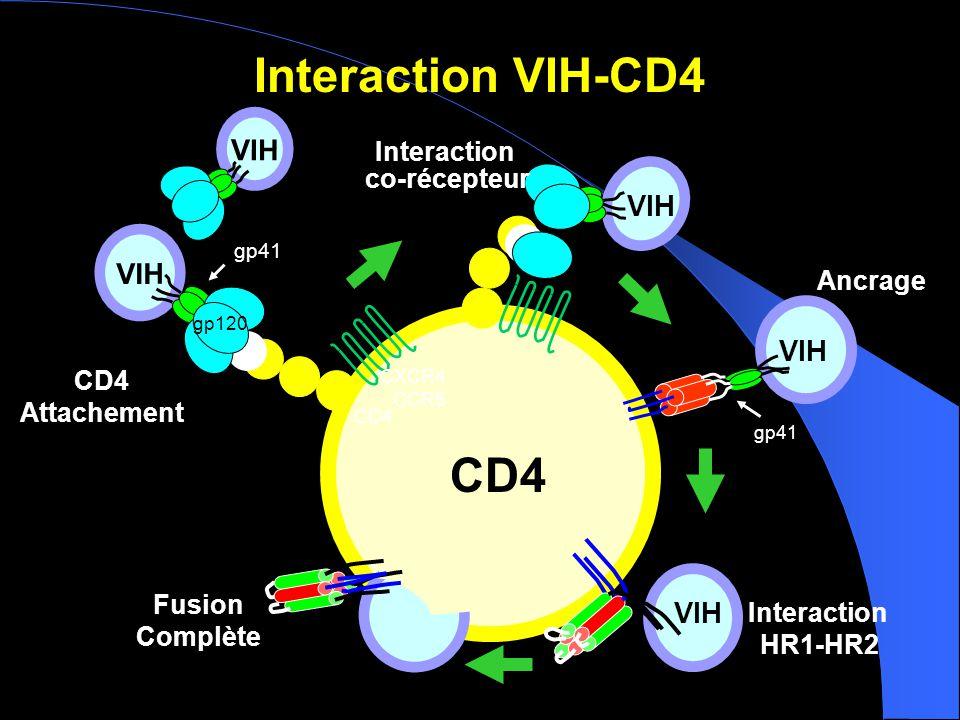 Interaction VIH-CD4 Fusion Complète CD4 Attachement Interaction HR1-HR2 CXCR4 CCR5 VIH gp120 Ancrage CD4 Interaction co-récepteur CD4 VIH gp41