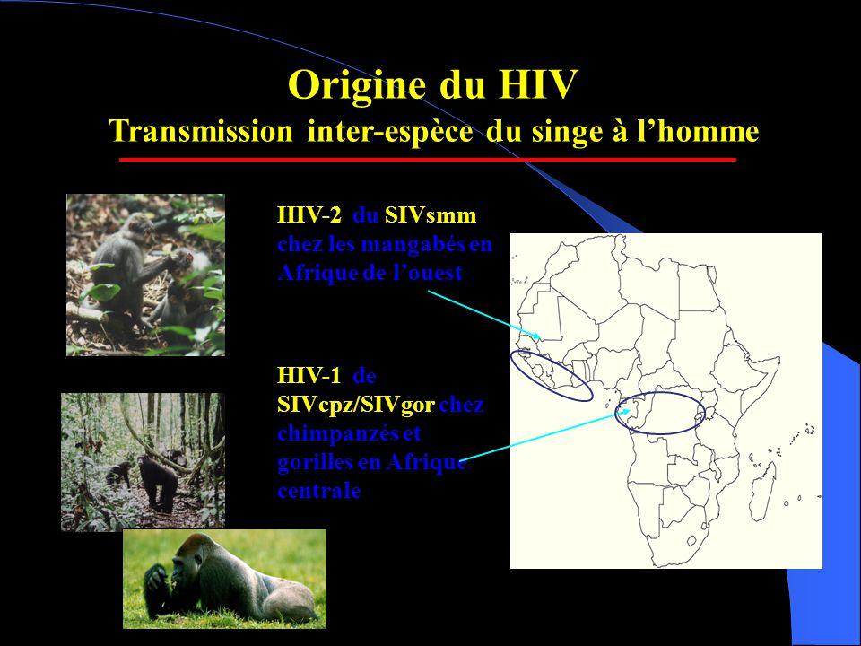 Origine du HIV Transmission inter-espèce du singe à l'homme HIV-2 du SIVsmm chez les mangabés en Afrique de l'ouest HIV-1 de SIVcpz/SIVgor chez chimpanzés et gorilles en Afrique centrale