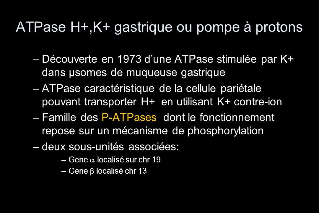 ATPase H+,K+ gastrique ou pompe à protons –Découverte en 1973 d'une ATPase stimulée par K+ dans µsomes de muqueuse gastrique –ATPase caractéristique d