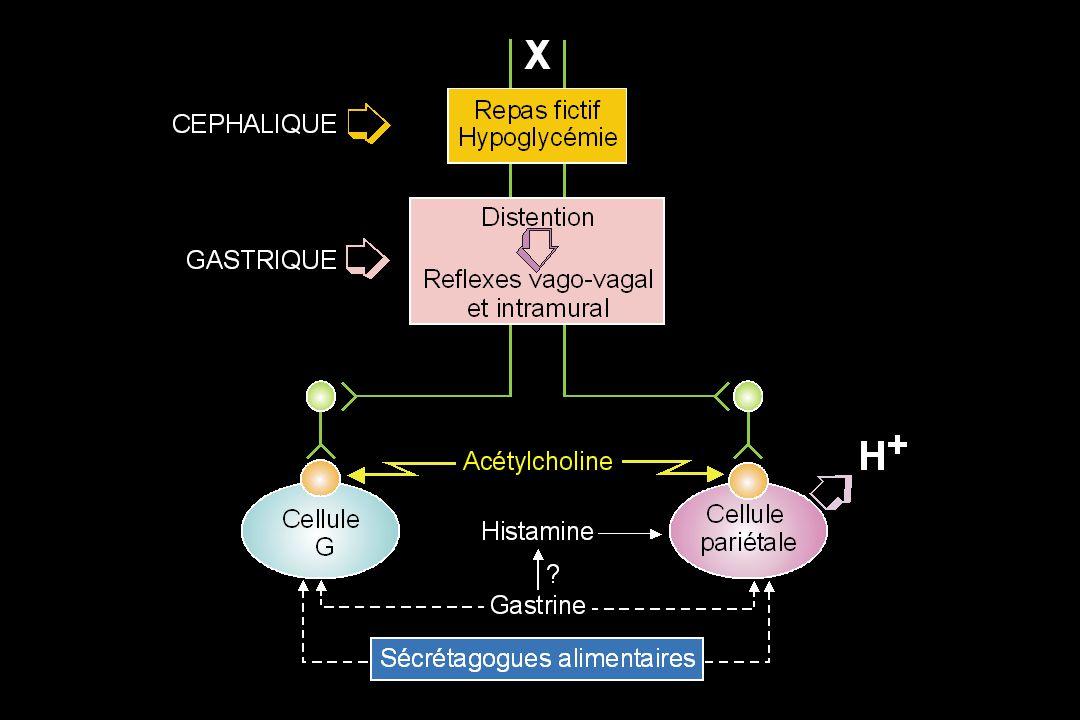 Sécrétion Acide Gastrique –Golgi en 1893 postule: La sécrétion acide gastrique provient des canalicules des cellules pariétales •Claude Bernard postule l'existence d'un précurseur de la production d'acide avec l'eau comme précurseur potentiel de la production de H+, OH- –Elle est initialement très concentrée : 1/1.000.000 H+ •Mécanisme capable de fournir cette énergie: –ATPase stimulée par l'ion K+ dans les µsomes de muqueuse de porc –ATPase transporte le K+ comme contre-ion H+ ATPase H+/K+ –ATPase appartient à une famille des ATPases de type P (Na+/K+; Ca++)
