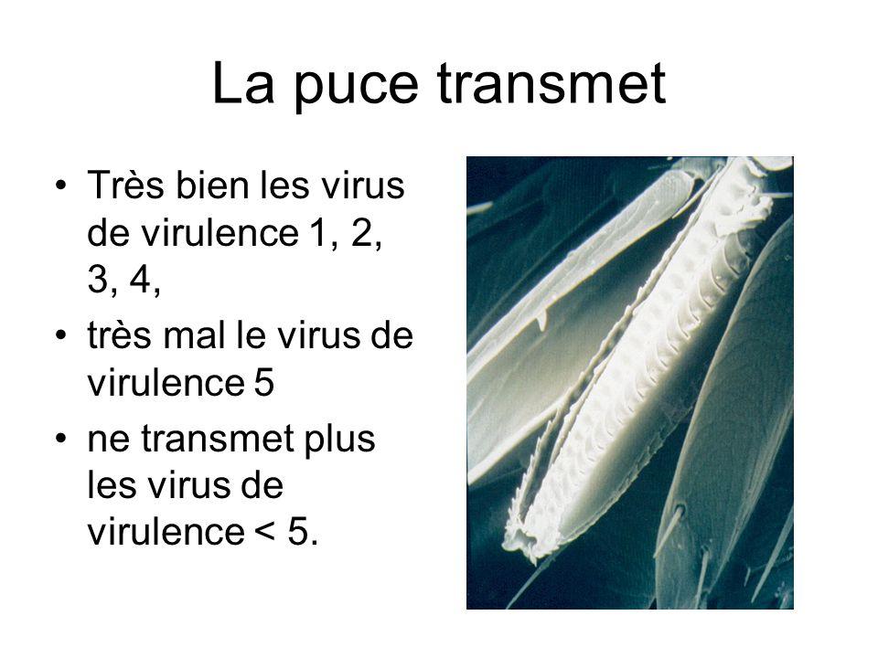 La puce transmet •Très bien les virus de virulence 1, 2, 3, 4, •très mal le virus de virulence 5 •ne transmet plus les virus de virulence < 5.