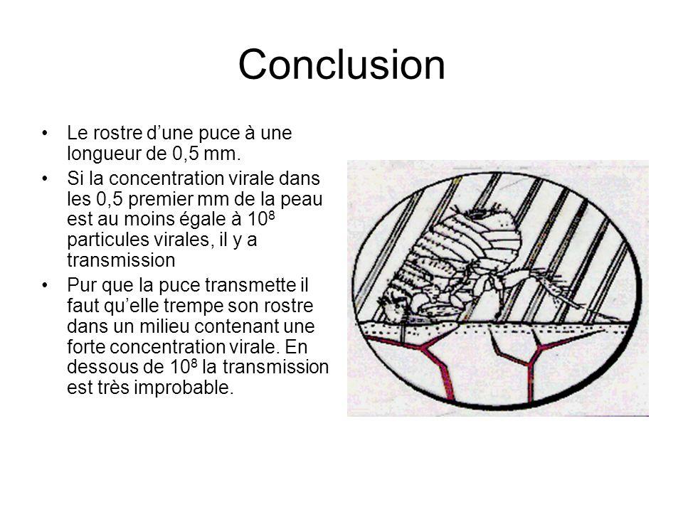 Conclusion •Le rostre d'une puce à une longueur de 0,5 mm.