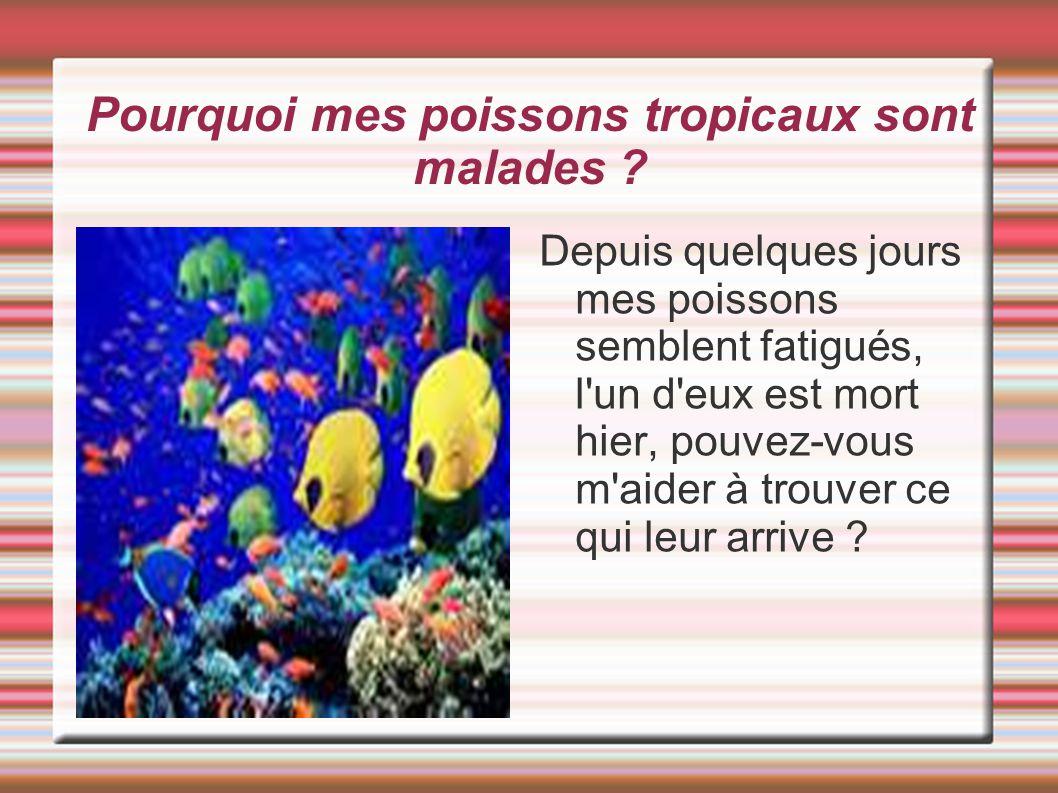 Pourquoi mes poissons tropicaux sont malades ? Depuis quelques jours mes poissons semblent fatigués, l'un d'eux est mort hier, pouvez-vous m'aider à t