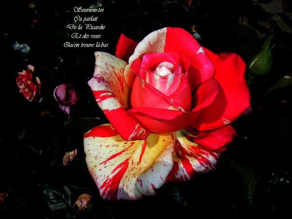 ... Souviens-toi Ça parlait De la Picardie Et des roses Qu on trouve là-bas