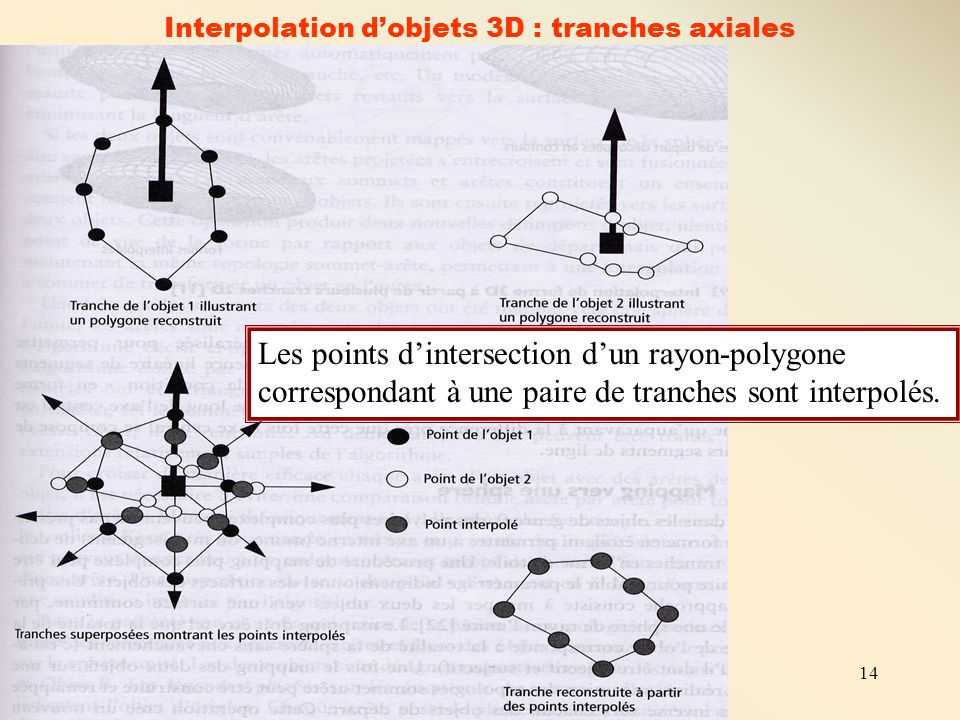 14 Interpolation d'objets 3D : tranches axiales Les points d'intersection d'un rayon-polygone correspondant à une paire de tranches sont interpolés.