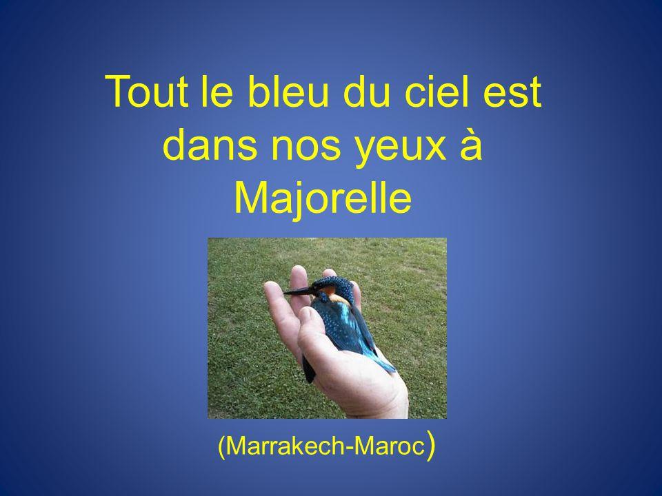 Tout le bleu du ciel est dans nos yeux à Majorelle (Marrakech-Maroc )