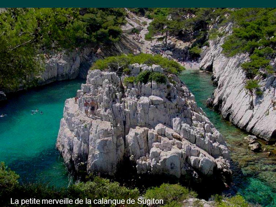 •Les calanques à l'Est et Ouest de Marseille sont des perles lumineuses d'azur et d'eaux émeraudes, dans leur écrin de falaises et d'aiguilles de calcaire blanc, piquées des panaches des pins verts qui s'y accrochent.