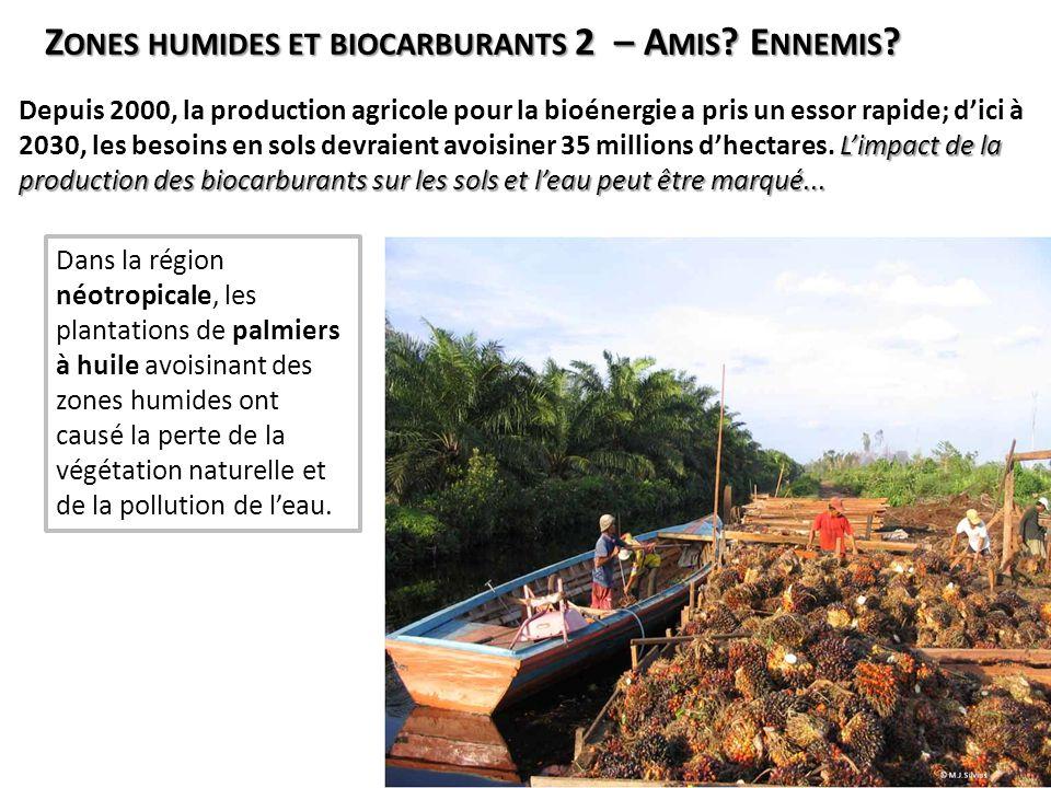 Dans la région néotropicale, les plantations de palmiers à huile avoisinant des zones humides ont causé la perte de la végétation naturelle et de la p