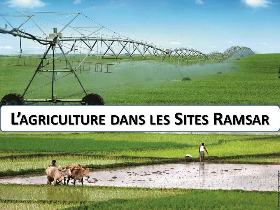 L' AGRICULTURE DANS LES S ITES R AMSAR