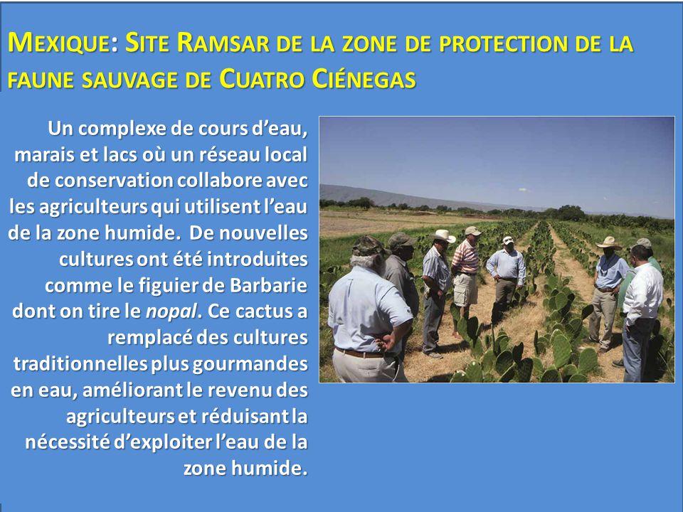 A© PFF Cuatrociénagas Un complexe de cours d'eau, marais et lacs où un réseau local de conservation collabore avec les agriculteurs qui utilisent l'ea