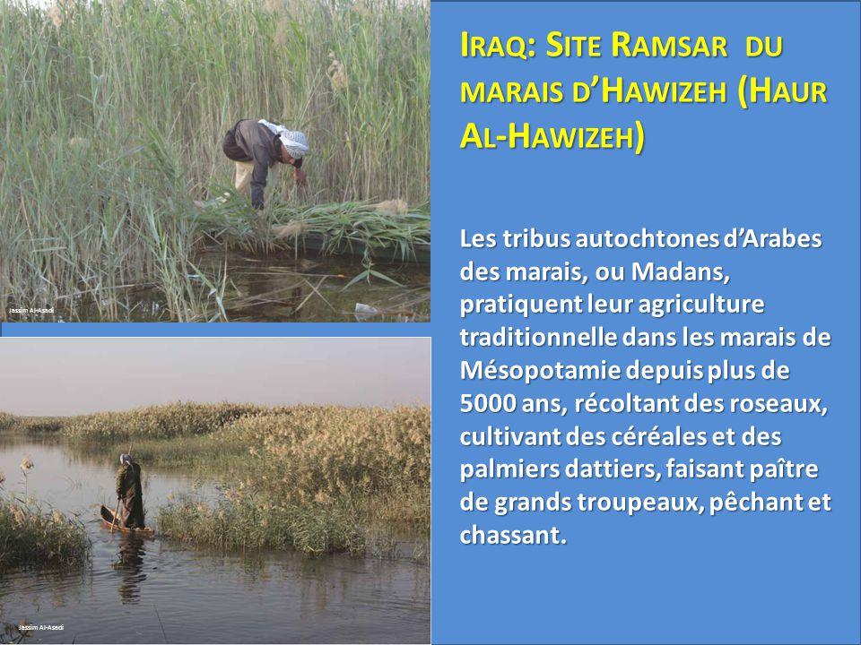 Jassim Al-Asadi I RAQ : S ITE R AMSAR DU MARAIS D 'H AWIZEH (H AUR A L -H AWIZEH ) Les tribus autochtones d'Arabes des marais, ou Madans, pratiquent l