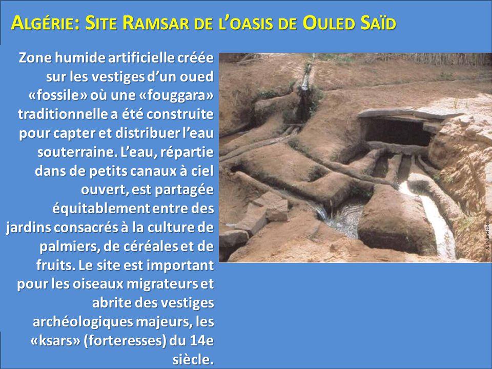 Zone humide artificielle créée sur les vestiges d'un oued «fossile» où une «fouggara» traditionnelle a été construite pour capter et distribuer l'eau