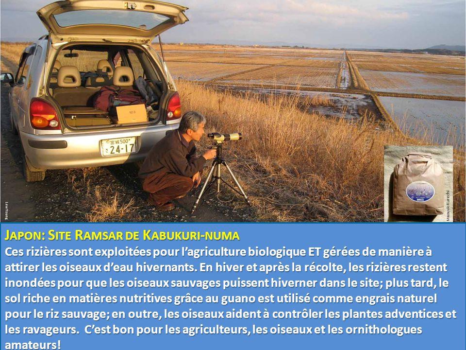 J APON : S ITE R AMSAR DE K ABUKURI - NUMA Ces rizières sont exploitées pour l'agriculture biologique ET gérées de manière à attirer les oiseaux d'eau