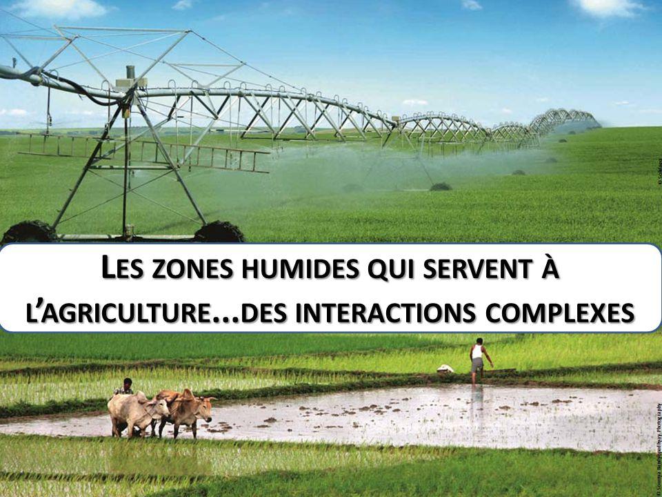 L ES ZONES HUMIDES QUI SERVENT À L ' AGRICULTURE... DES INTERACTIONS COMPLEXES
