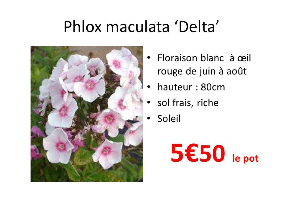 Phlox maculata 'Natasha' • Floraison rose et blanc de juin à août • hauteur : 80cm • sol frais, riche • Soleil 5€ 50 le pot