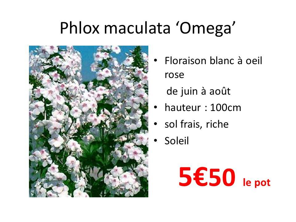 Phlox paniculata 'Franz Shubert' • Floraison lilas de juillet à septembre • hauteur : 80cm • sol frais, riche • Soleil 5€ 50 le pot