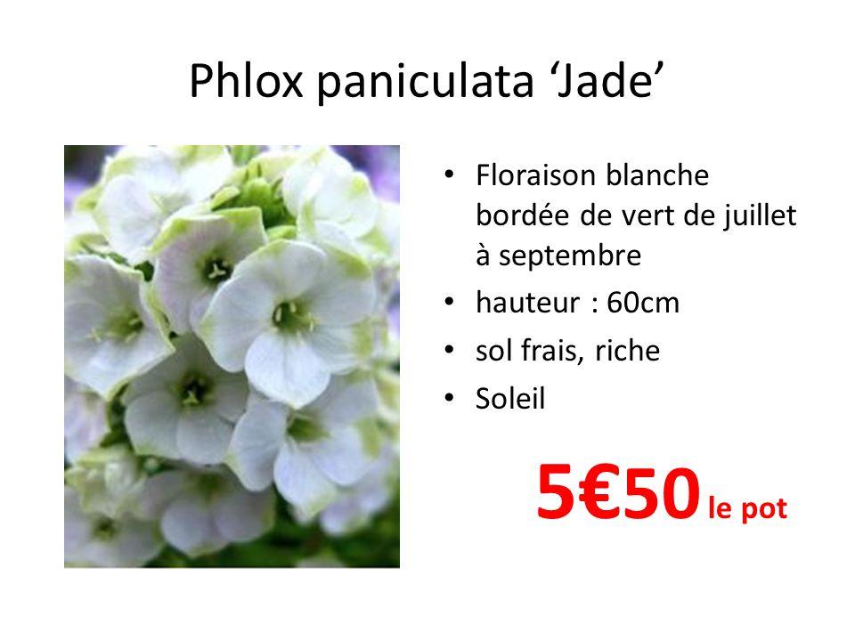Phlox paniculata 'Little Boy' • Floraison bleu lilas à œil blanc de juillet à septembre • hauteur : 40cm • sol frais, riche • Soleil 5€ 50 le pot
