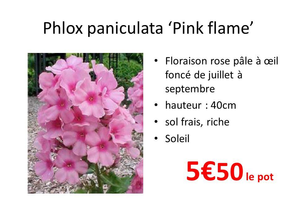 Phlox paniculata 'Pink flame' • Floraison rose pâle à œil foncé de juillet à septembre • hauteur : 40cm • sol frais, riche • Soleil 5€ 50 le pot