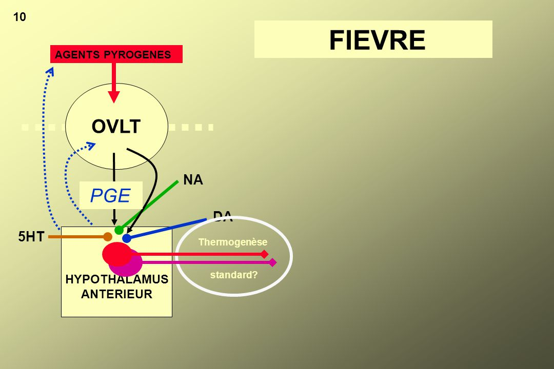 HYPOTHALAMUS ANTERIEUR 10 OVLT AGENTS PYROGENES PGE DA NA 5HT Thermogenèse FIEVRE standard?