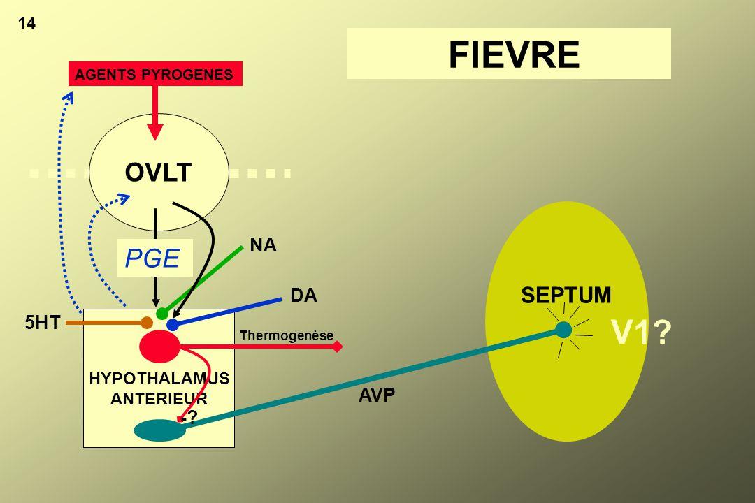 SEPTUM 14 HYPOTHALAMUS ANTERIEUR OVLT AGENTS PYROGENES PGE DA NA 5HT AVP Thermogenèse V1? -? FIEVRE