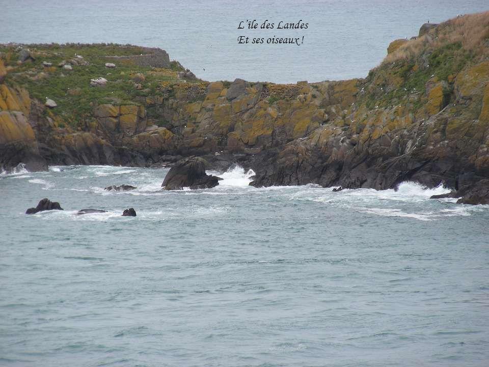 L'île des Landes Et ses oiseaux !