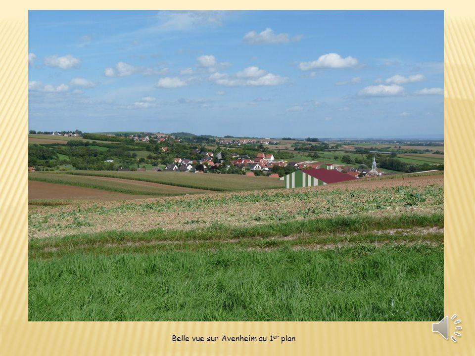 Belle vue sur Avenheim au 1 er plan