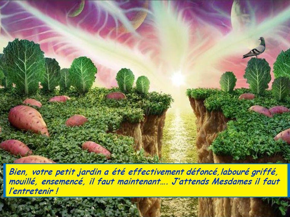 Bien, votre petit jardin a été effectivement défoncé,labouré griffé, mouillé, ensemencé, il faut maintenant….