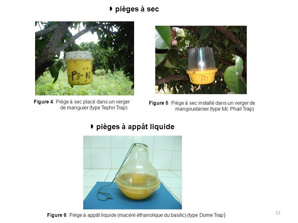 13  pièges à sec Figure 4: Piège à sec placé dans un verger de manguier (type Tephri Trap) Figure 5: Piège à sec installé dans un verger de mangousta