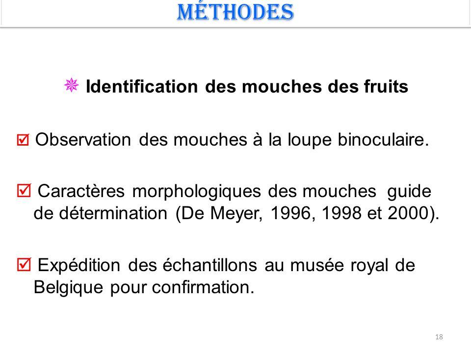 18 Méthodes  Identification des mouches des fruits  Observation des mouches à la loupe binoculaire.  Caractères morphologiques des mouches guide de