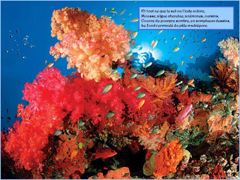 Le soleil sous la mer, mystérieuse aurore, Éclaire la forêt des coraux abyssins Qui mêle, aux profondeurs de ses tièdes bassins, La bête épanouie et la vivante flore.