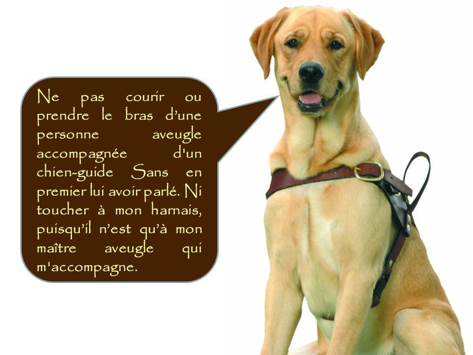 Si un aveugle.Avec un chien-guide vous demande une direction.