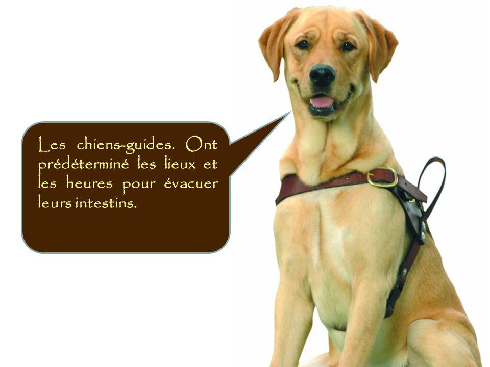 Ne pas courir ou prendre le bras d'une personne aveugle accompagnée d un chien-guide Sans en premier lui avoir parlé.