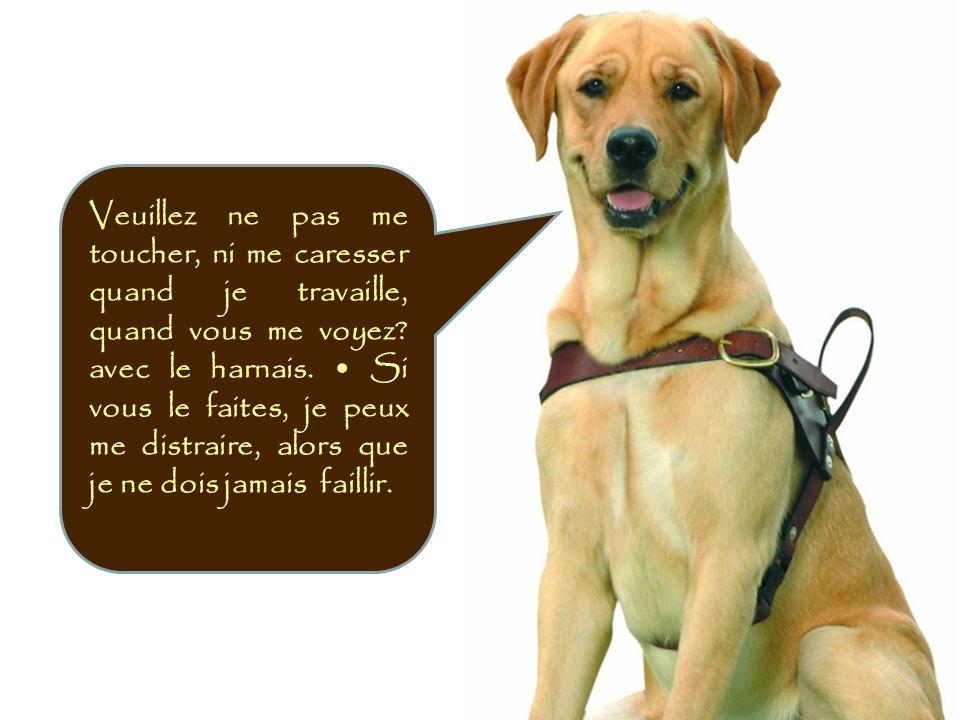 Mon comportement, et mes relations sont totalement différentes des autres chiens et doivent être respectés dans mon double rôle de guide et de fidèle compagnon, Pour mon maître aveugle.