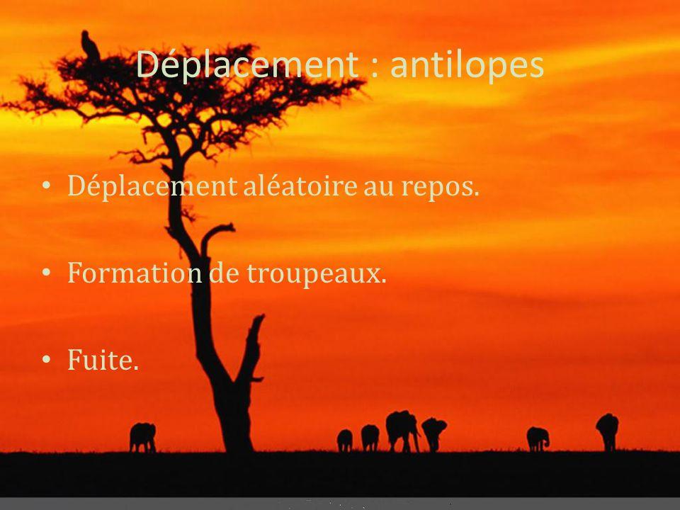 Déplacement : antilopes • Déplacement aléatoire au repos. • Formation de troupeaux. • Fuite.