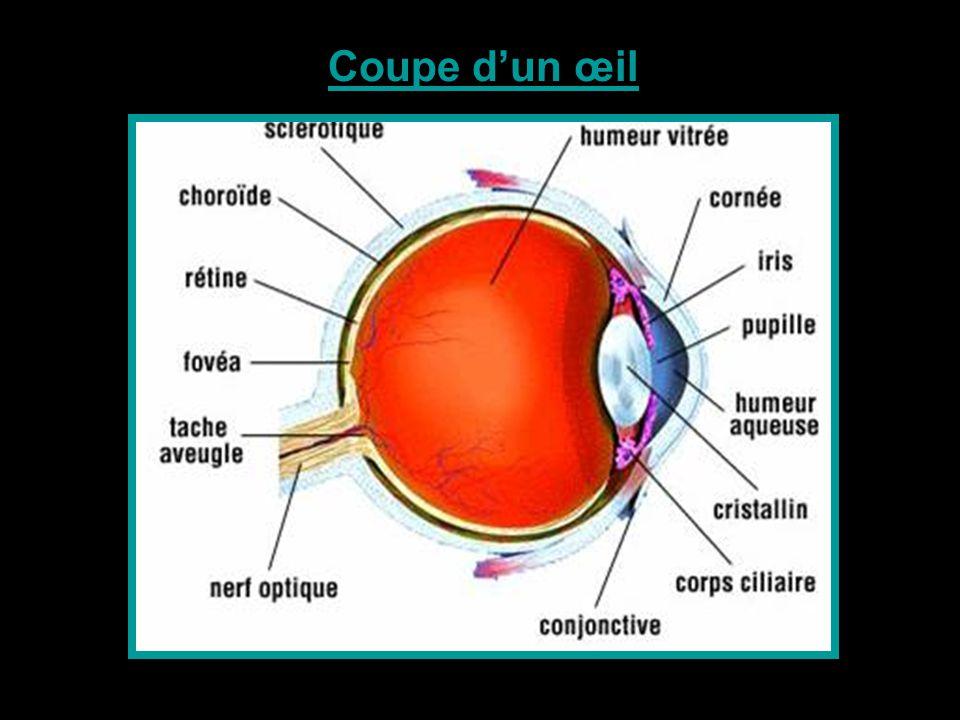 Vision d'un œil normal