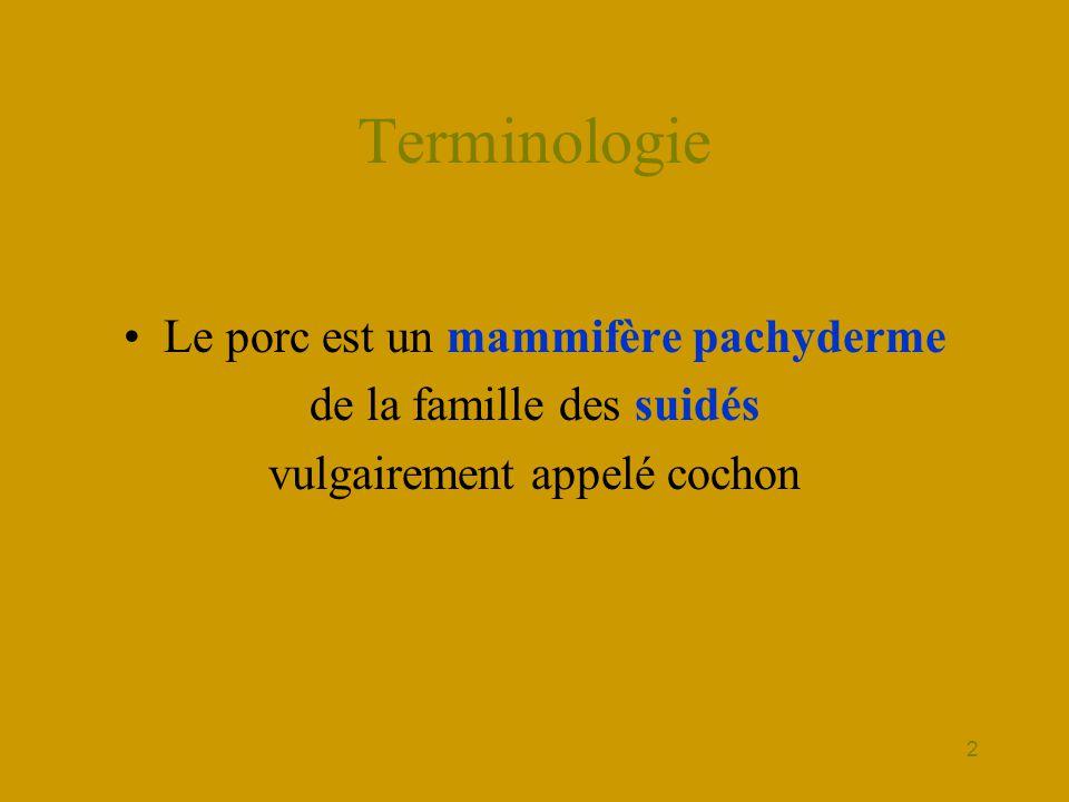 3 Terminologie La famille porcine se compose : •Du mâle - le verrat •La femelle - la truie •Les petits - les porcelets