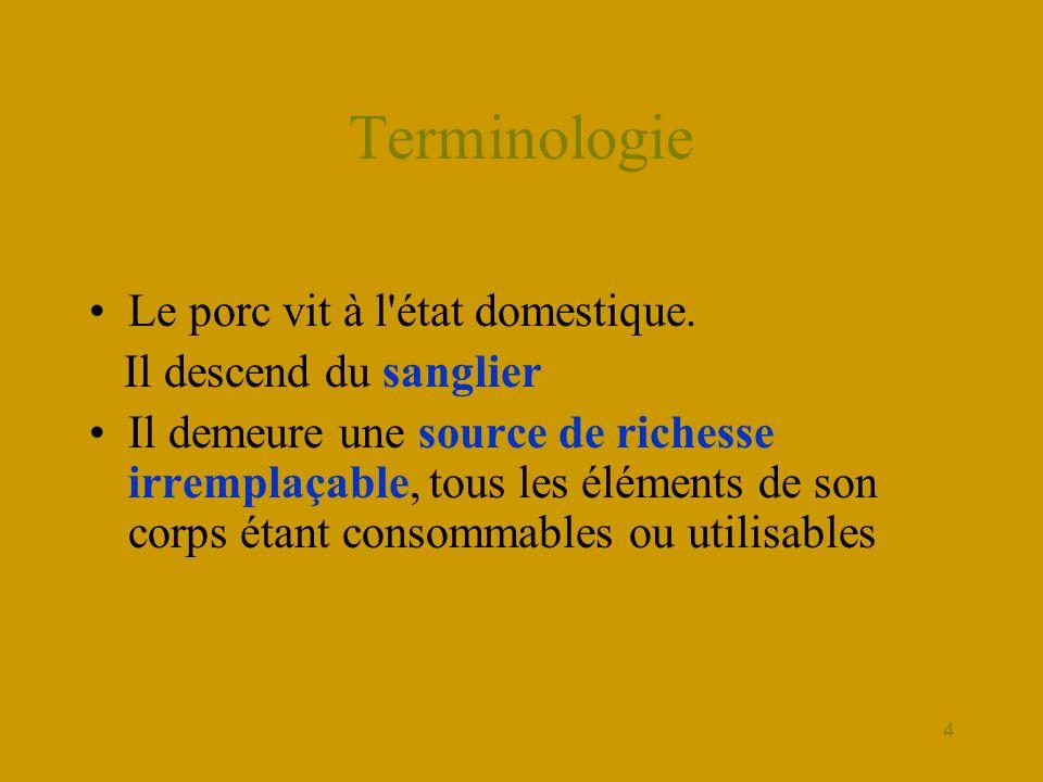 4 Terminologie •Le porc vit à l'état domestique. Il descend du sanglier •Il demeure une source de richesse irremplaçable, tous les éléments de son cor