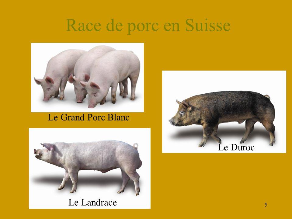 5 Race de porc en Suisse Le Grand Porc Blanc Le Landrace Le Duroc
