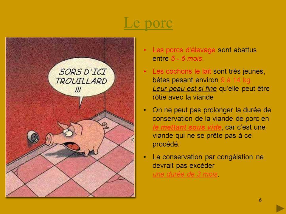 Le porc 6 •Les porcs d'élevage sont abattus entre 5 - 6 mois.