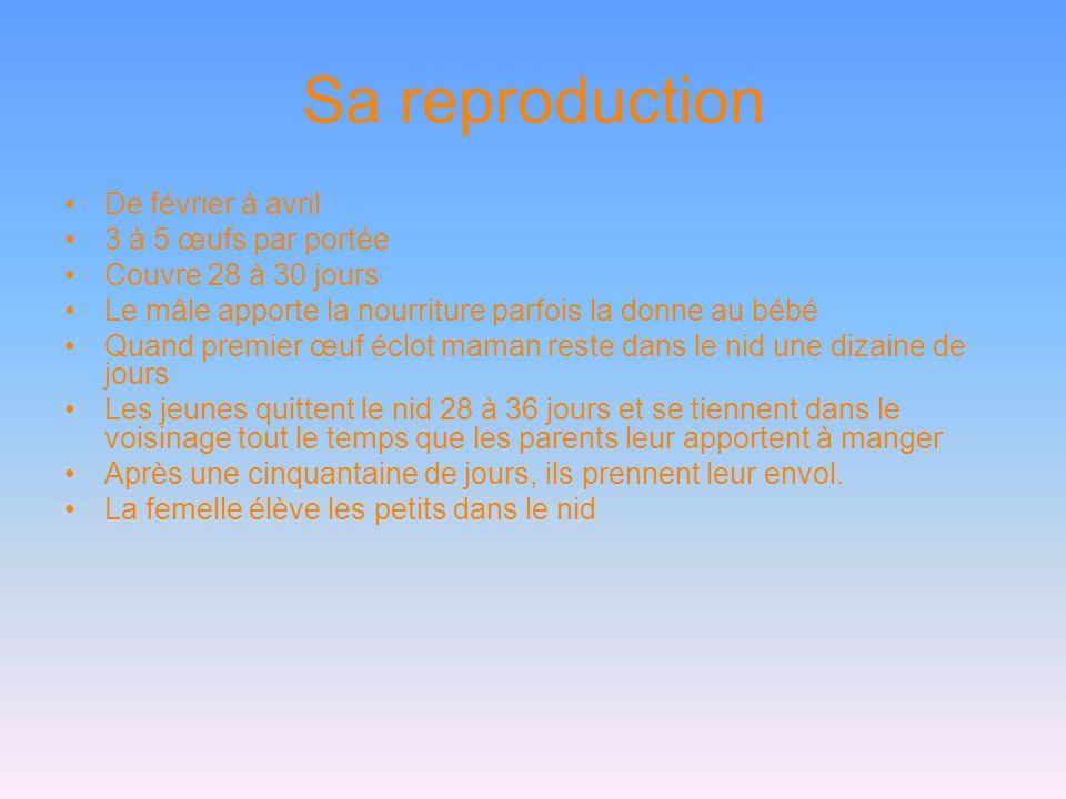 Sa reproduction •De février à avril •3 à 5 œufs par portée •Couvre 28 à 30 jours •Le mâle apporte la nourriture parfois la donne au bébé •Quand premie