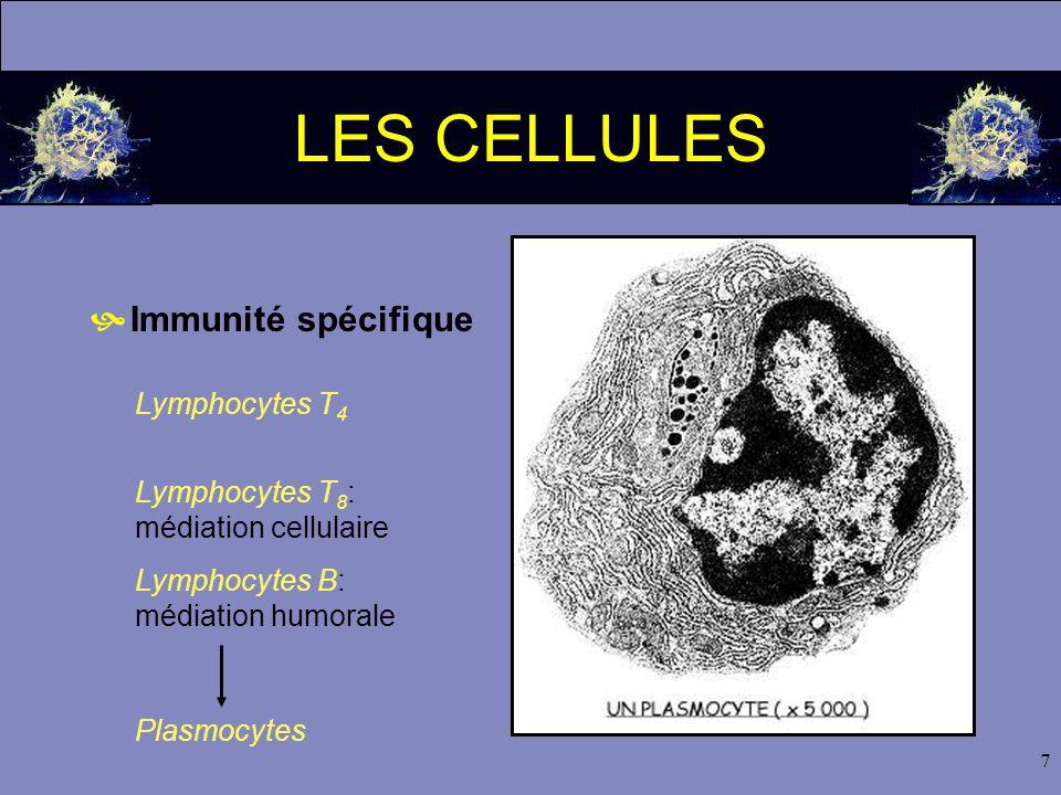 7 LES CELLULES  Immunité spécifique Lymphocytes T 4 Lymphocytes T 8 : médiation cellulaire Lymphocytes B: médiation humorale Plasmocytes