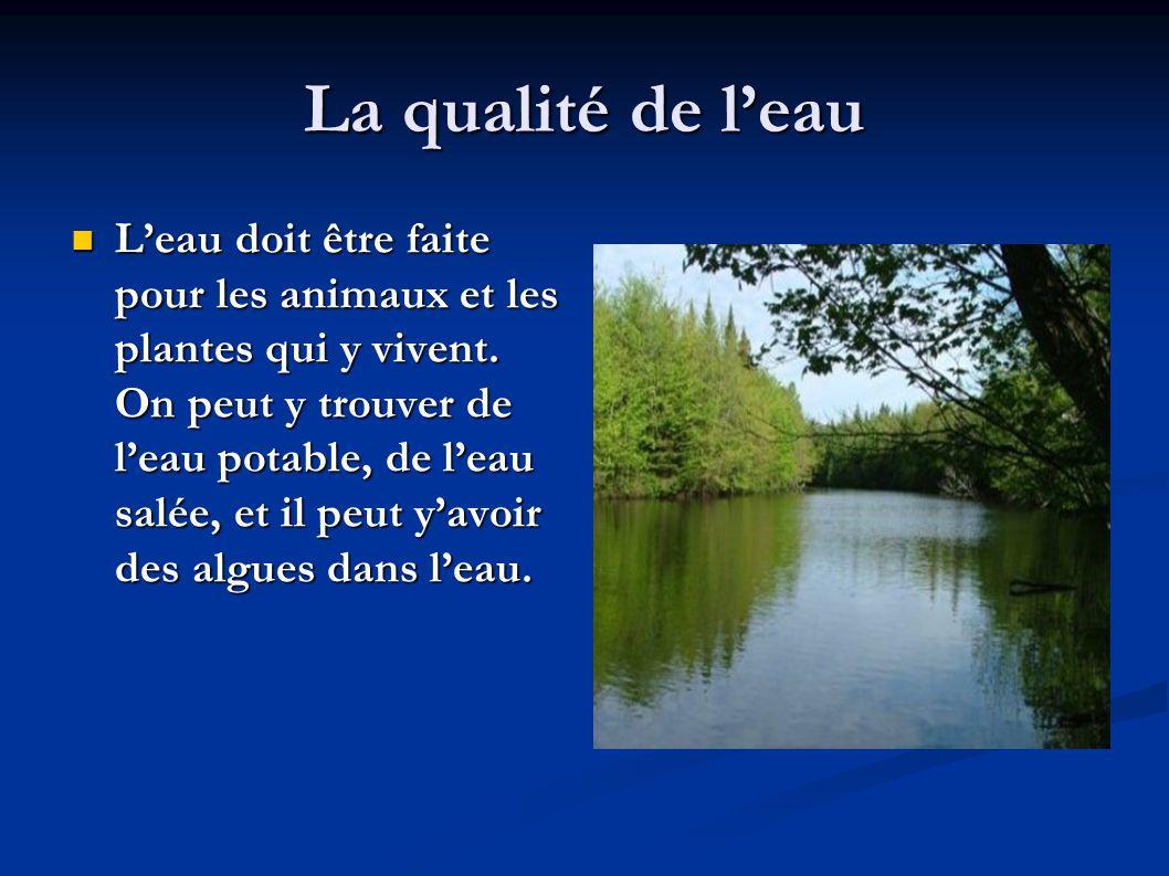 La qualité de l'eau  L'eau doit être faite pour les animaux et les plantes qui y vivent.