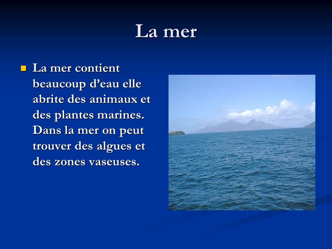 La mer  La mer contient beaucoup d'eau elle abrite des animaux et des plantes marines. Dans la mer on peut trouver des algues et des zones vaseuses.